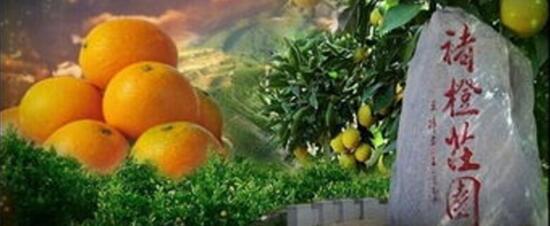 参观红塔与褚橙庄园